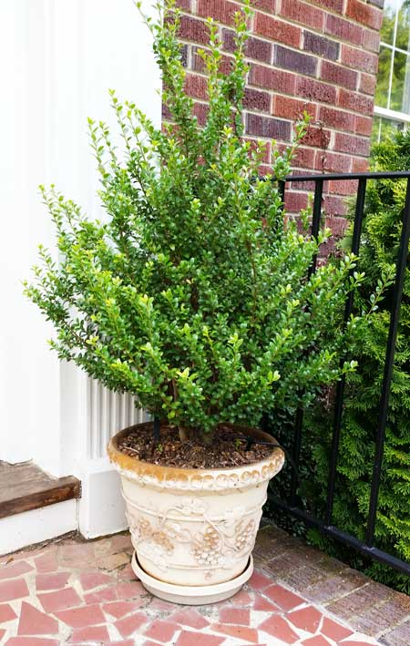 pot-holly-front-door_151155